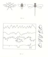 昆虫的运动规律